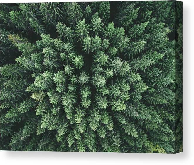 Aerial Canvas Print featuring the photograph Moody Forest From Above by Christian Lindsten