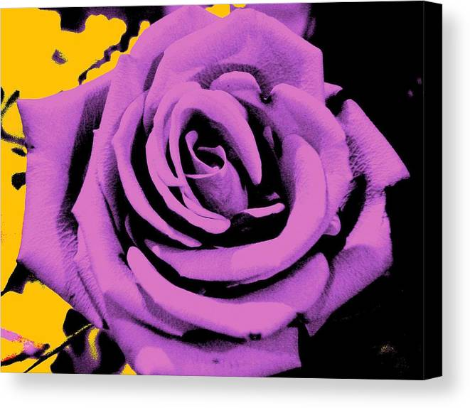 Rose Canvas Print featuring the photograph Alchemy Rose by Lessandra Grimley