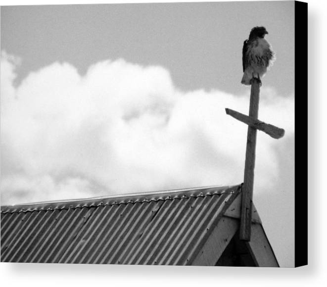 Hawk Canvas Print featuring the photograph Young Hawk by Allan McConnell