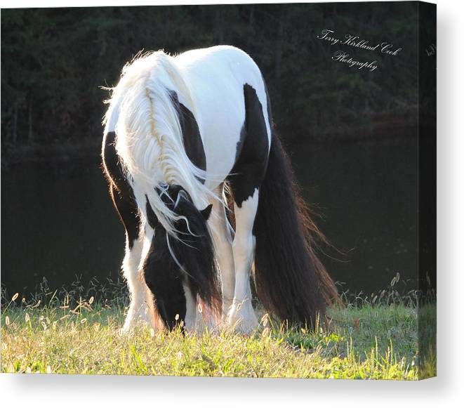 Equine Canvas Print featuring the photograph In The Wind by Terry Kirkland Cook