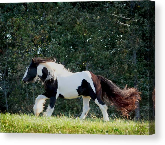 Equine. Equestrian Canvas Print featuring the photograph That Amazing Tail by Terry Kirkland Cook
