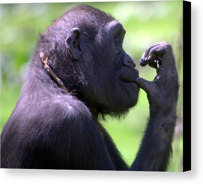 Monkey Canvas Print featuring the photograph Monkey Thinking by April Holgate