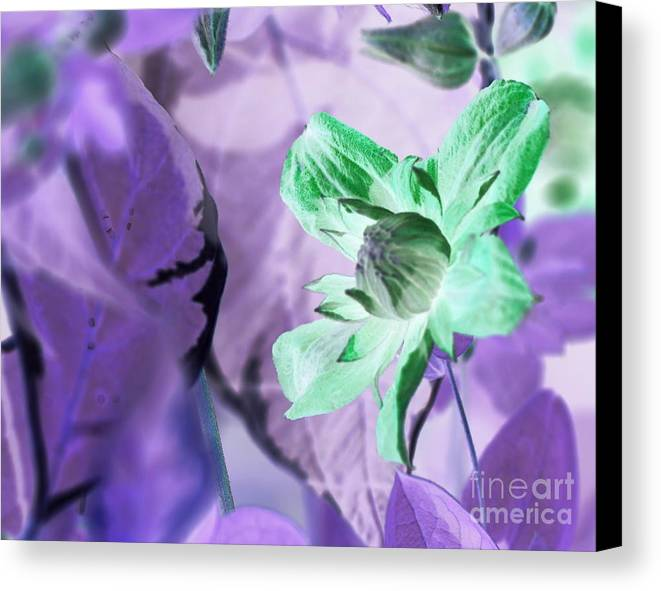 Inverted Colors Canvas Print featuring the photograph Moonwalk Clematis by Carol Komassa