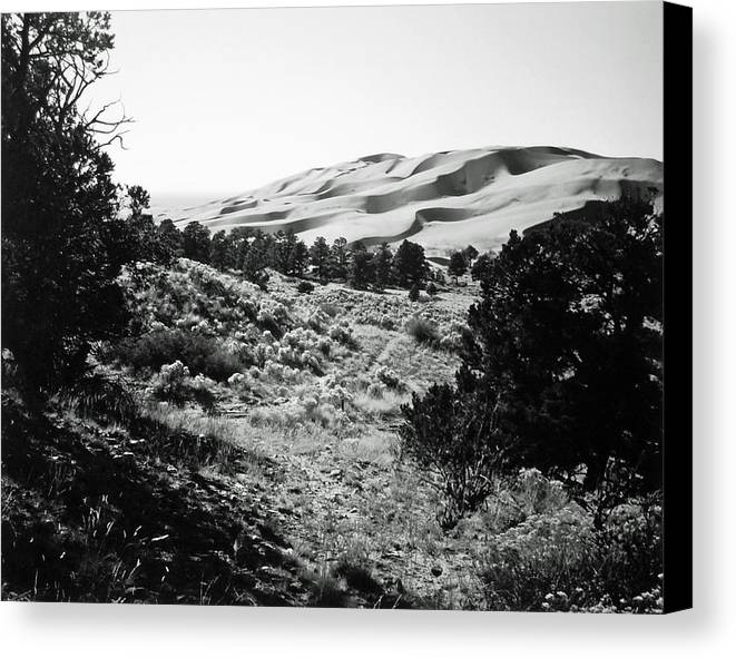 Landscape Canvas Print featuring the photograph Path To The Dunes by Allan McConnell