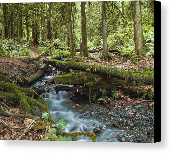 Stream Canvas Print featuring the photograph Rainforest At Bridal Veil Falls - British Columbia by Linda McRae