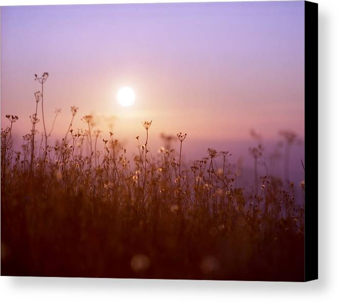 Mountain Canvas Print featuring the photograph Mountain Flower Rising by Benjamin Garvey