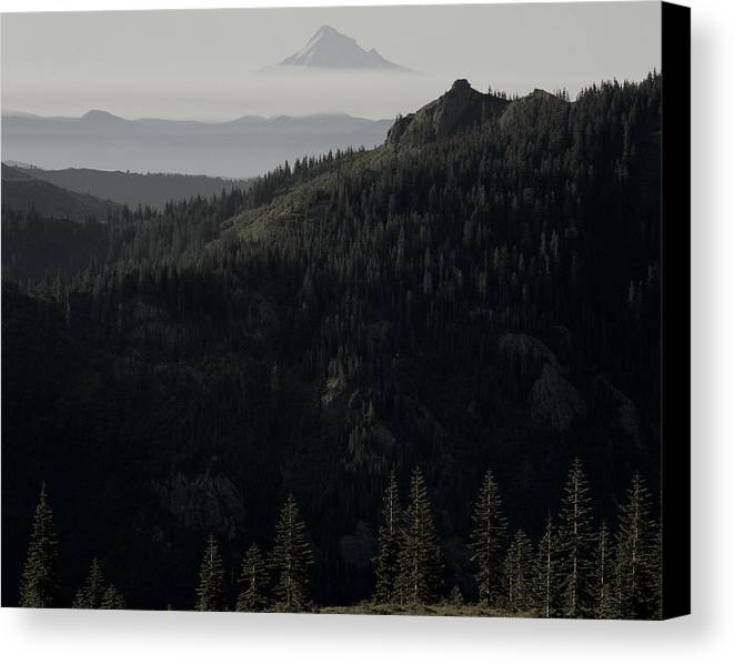 Nature Canvas Print featuring the photograph Silverstar Trees by Benjamin Garvey