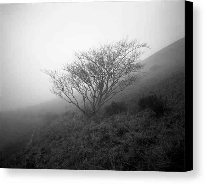 Nature Canvas Print featuring the photograph Tree Mist by Benjamin Garvey