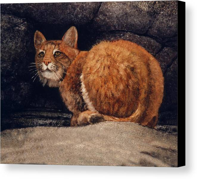 Wildlife Canvas Print featuring the painting Bobcat On Ledge by Frank Wilson