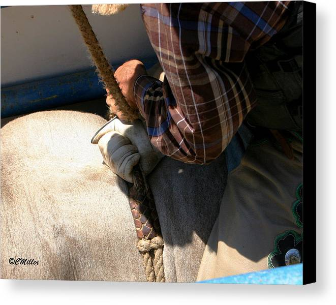 Rodeo Canvas Print featuring the photograph Gettin His Wraps.. by Carol Miller