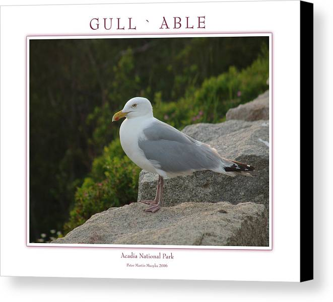 Landscape Canvas Print featuring the photograph Gull Able by Peter Muzyka
