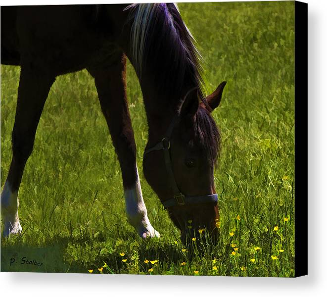 Horse Canvas Print featuring the digital art Phantom by Patricia Stalter