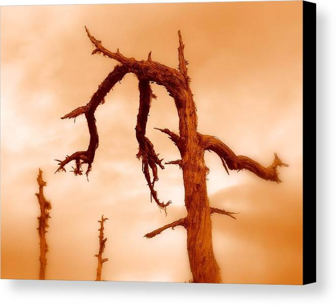 Tree Canvas Print featuring the photograph Retired by Miron Abramovici