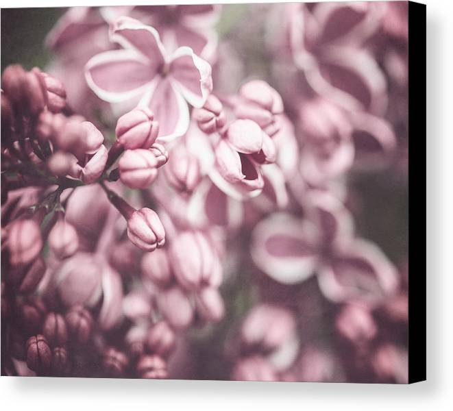 Flower Canvas Print featuring the photograph Silver Lilacs by Lisa Russo