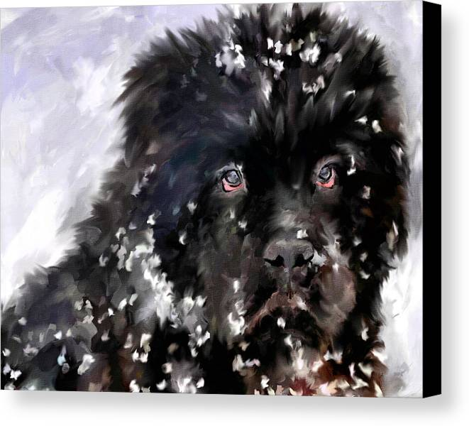 Newfoundland Canvas Print featuring the painting Snow Play by Jai Johnson