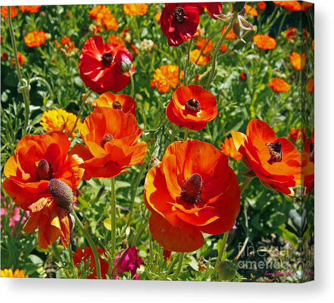 Holy Saturday Flowers 2013 Canvas Print featuring the photograph California Poppy's by Kenny Bosak
