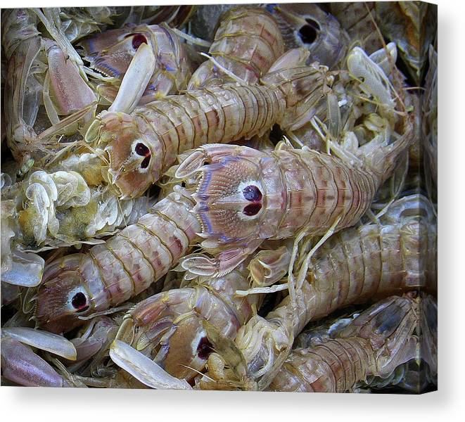 Europe Canvas Print featuring the photograph A Tail For The Gourmand by Scott and Rebecca Rothney
