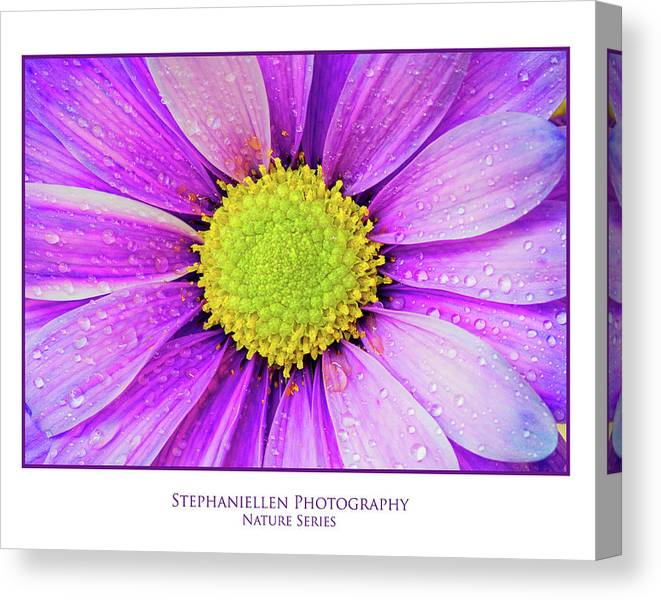 Daisy Canvas Print featuring the photograph Purple Daisy by Stephanie Hayes