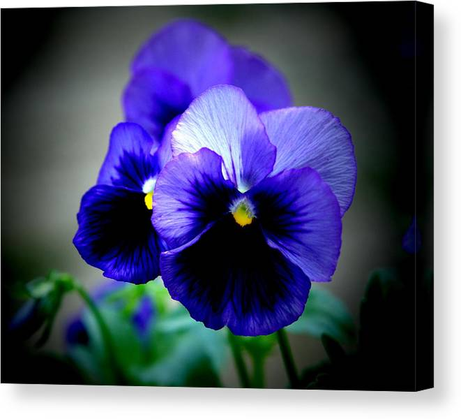 Pansy Canvas Print featuring the photograph Purple Pansy - 8x10 by B Nelson