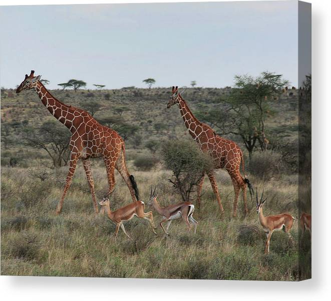 Nature Canvas Print featuring the photograph Size Matters by Scott and Rebecca Rothney