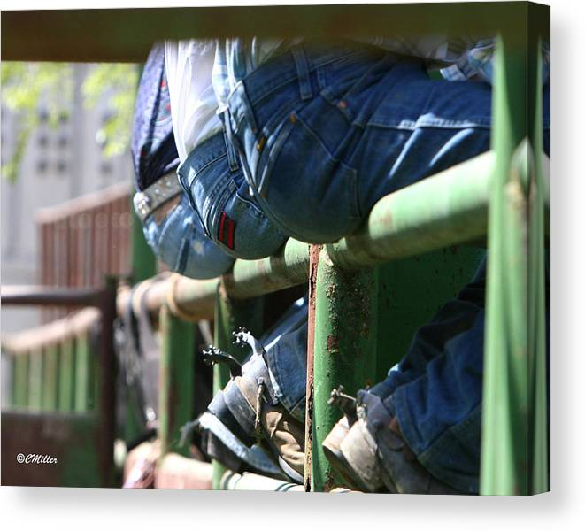 Rodeo Canvas Print featuring the photograph Love Those Wrangler Butts by Carol Miller