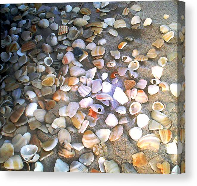 Photography Canvas Print featuring the painting Sea Shells by Evelyn Patrick