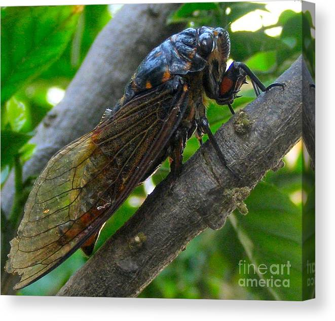 Cicada Canvas Print featuring the photograph Taking A Rest by Kathy Daxon