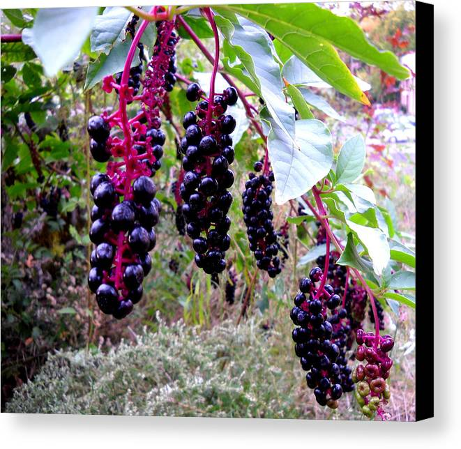 Berry Canvas Print featuring the glass art Wild Berry by George Griffiths