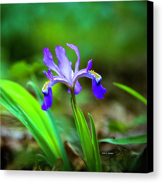 Iris Canvas Print featuring the photograph Dwarf Crested Iris by Dale R Carlson