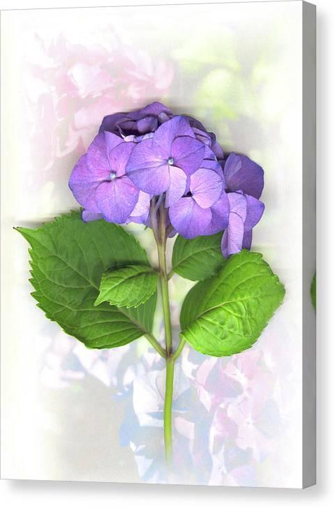 Purple Canvas Print featuring the mixed media Purple Hydrangea by Sandi F Hutchins