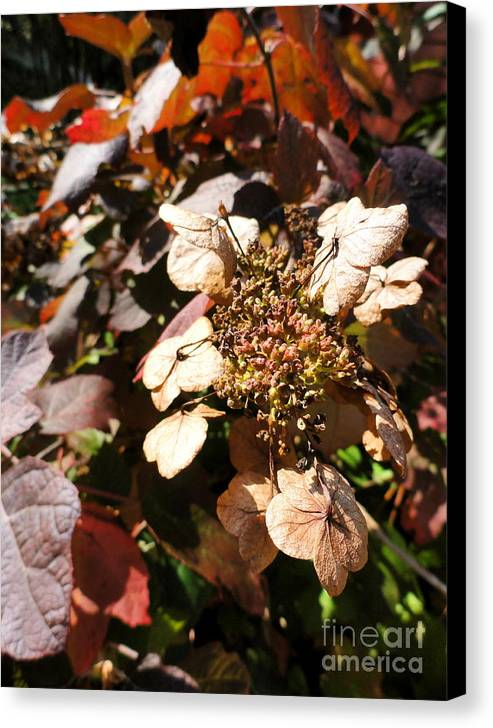 Leaves Canvas Print featuring the photograph Light As Paper by Trish Hale