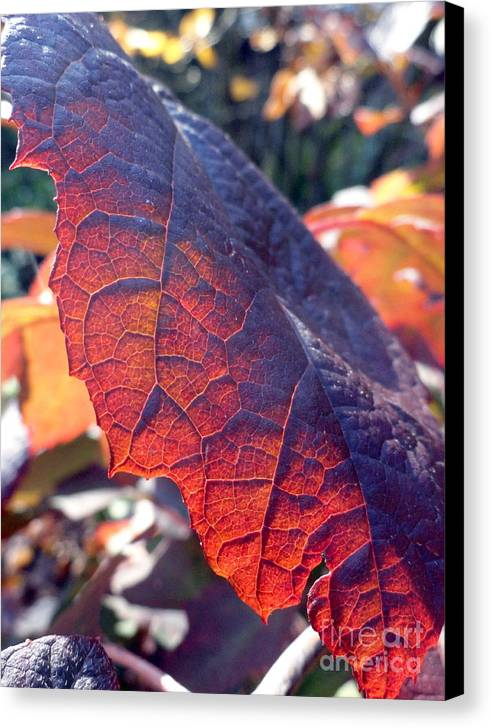 Leaves Canvas Print featuring the photograph Light Of The Lifeblood by Trish Hale