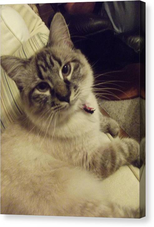 Cat Canvas Print featuring the photograph Couched In Comfort by Lori-Anne Fay