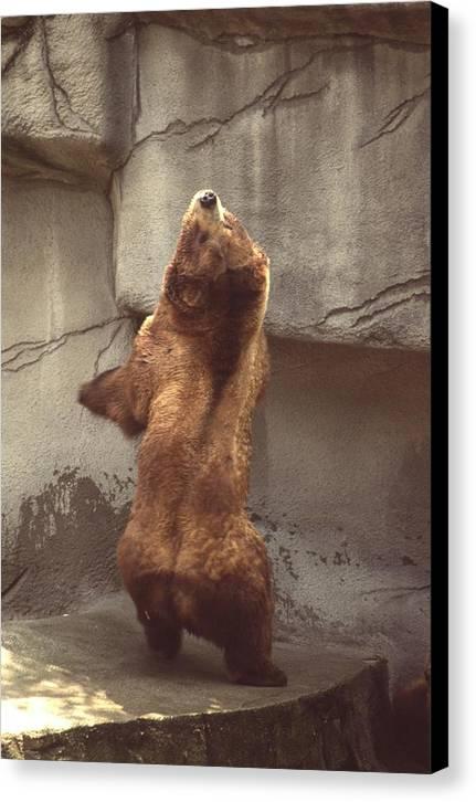 Bear Canvas Print featuring the photograph Disco Bear 52891-1 by Mike Davis