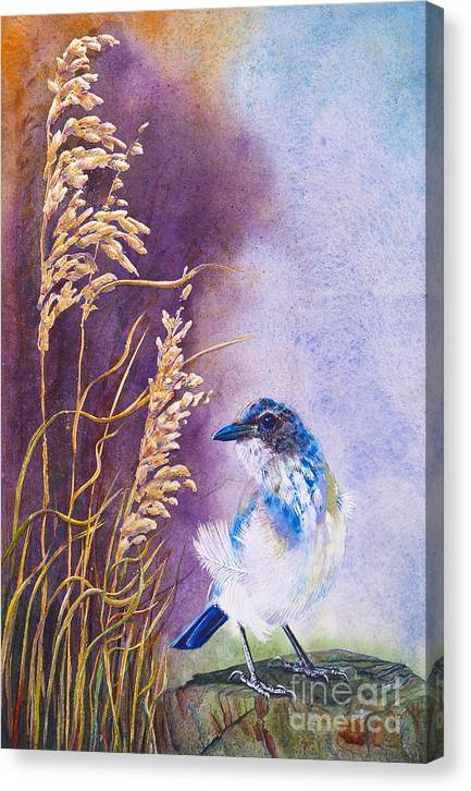 Scrub Jay Canvas Print featuring the painting Bad Feather Day by Jany Schindler