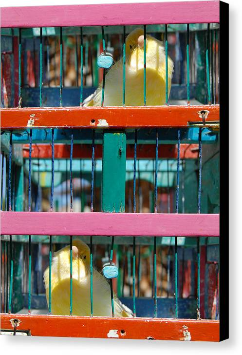 Mexico Mexican Customs Culture Traditions Games Of Chance Fortune Telling Future Latino Canaries Birds Canvas Print featuring the photograph Bird Of Luck Pajaro De La Suerte by George Olney