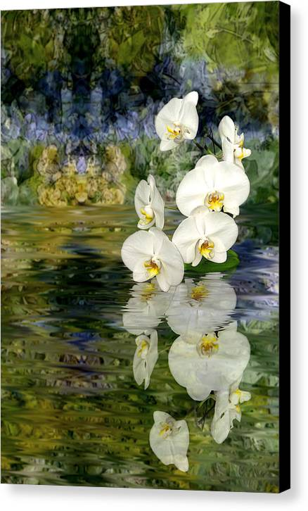 Orchid Canvas Print featuring the photograph Water Orchid by Tom Romeo