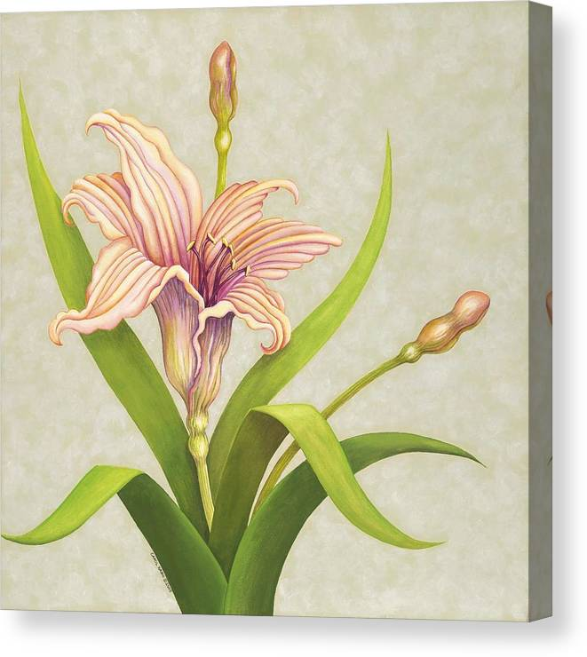 Soft Peach Lily In A Pose Canvas Print featuring the painting Peach Lily by Carol Sabo