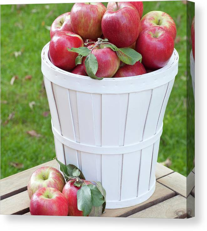 Outdoors Canvas Print featuring the photograph Basket Of Honey Crisp Apples by Wholden