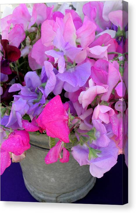 Sweet Peas Canvas Print featuring the photograph Bucket Of Peas by James Temple