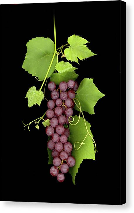 Canvas Print featuring the photograph Fruit Of The Vine by Sandi F Hutchins