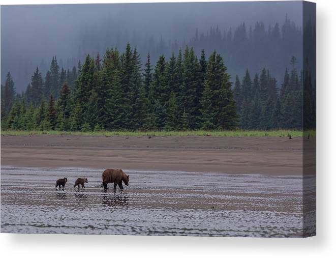 Brown Bear Canvas Print featuring the photograph Brown Bear In Lake Clark National Park by Gavriel Jecan
