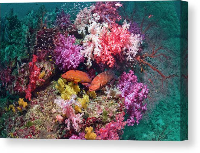 Tranquility Canvas Print featuring the photograph Coral Reef Scenery by Georgette Douwma