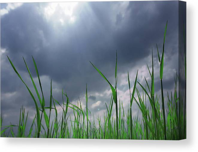 Thunderstorm Canvas Print featuring the photograph Corn Plant With Thunderstorm Clouds by Silvia Otte
