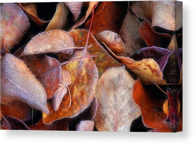 First Frost Canvas Print featuring the photograph First Frost by Bill Morgenstern