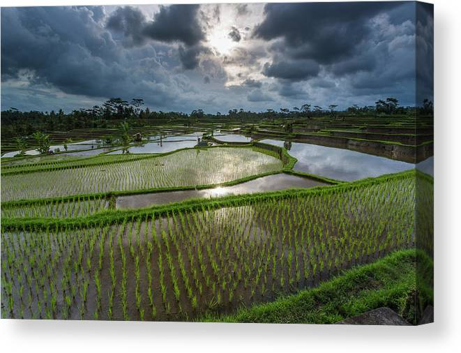 Tranquility Canvas Print featuring the photograph Rice Terraces In Central Bali Indonesia by Gavriel Jecan