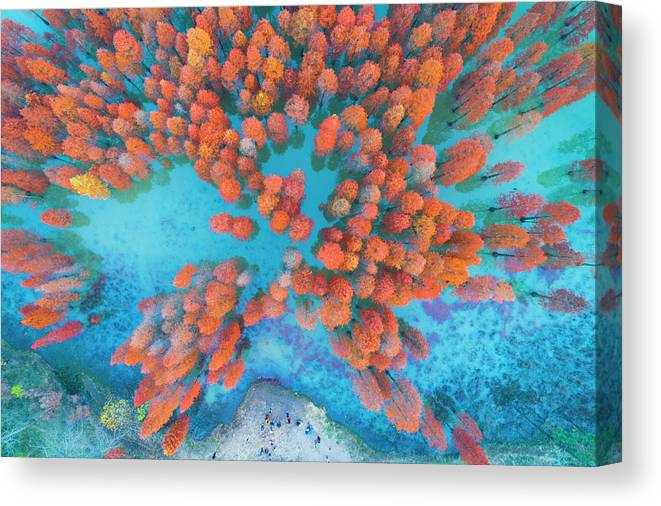 Tranquility Canvas Print featuring the photograph Aerial Drone View With Fir Tree Fall by Yaorusheng
