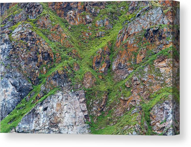 Grass Canvas Print featuring the photograph Black Legged Kittiwake Cliffs In The by Anna Henly