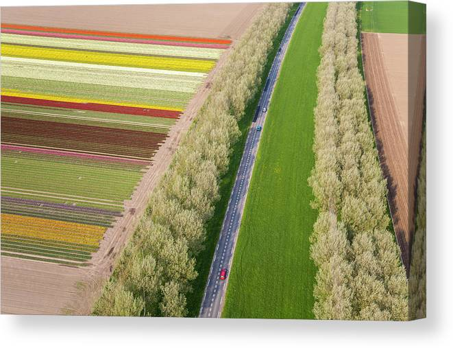 Scenics Canvas Print featuring the photograph Car On Road Near Tulip Fields, Holland by Peter Adams