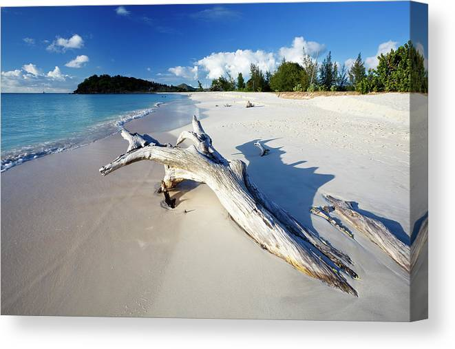 Water's Edge Canvas Print featuring the photograph Caribbean Beach With Driftwood by Michaelutech